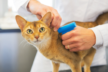 Everything You Need To Know About Microchipping Your Cat