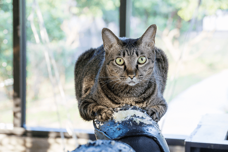 How To Stop Cat Scratching Problems Without Declawing