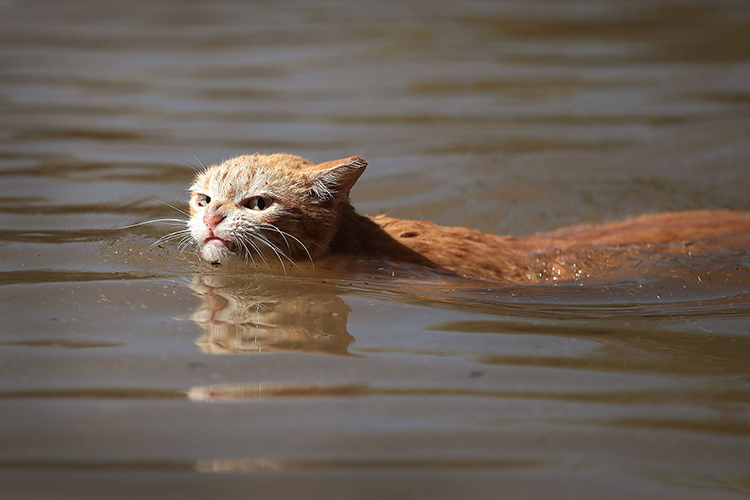 After Hurricane Harvey, Cats Become A Symbol Of Survival