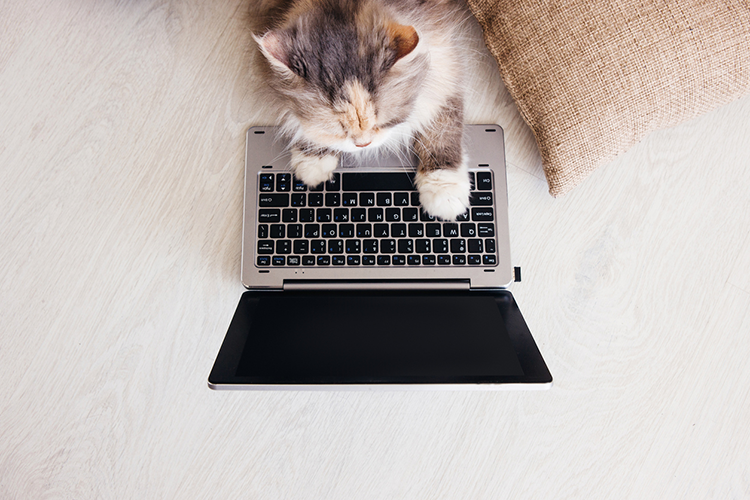 Fantastic Feline Facebook Groups You Should Follow
