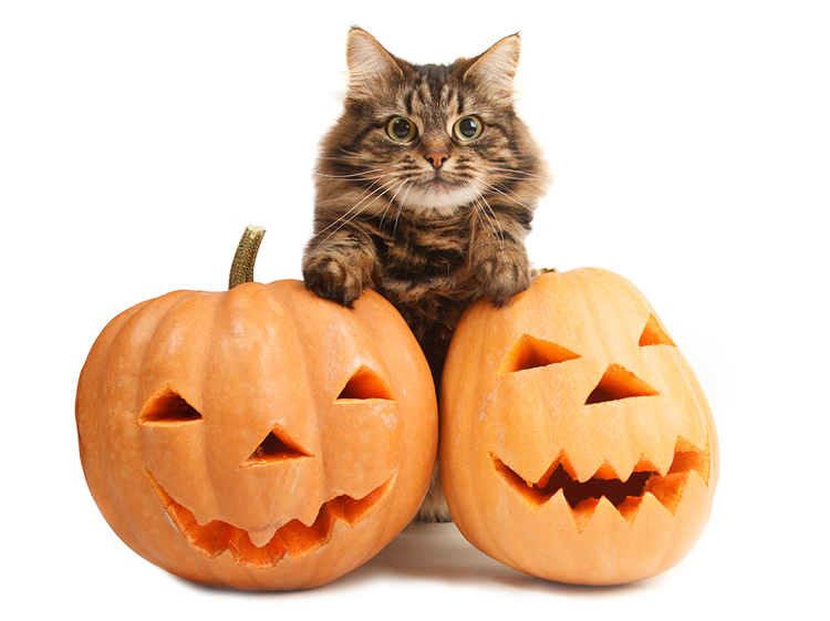 Spook-tastic Cat Names For Halloween