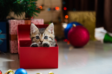 Cats As Gifts: Why You Should Give Serious Thought Beforehand