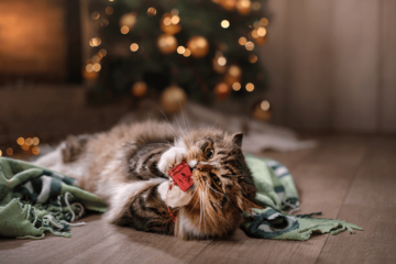 Popular Gifts That Are Bad for Cats