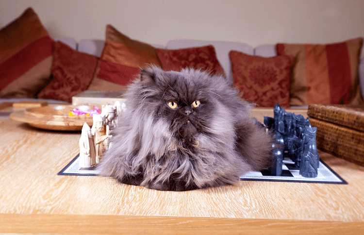 5 Games for Cat Lovers