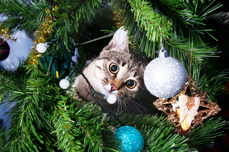 Your Feline-Friendly Christmas Tree Guide