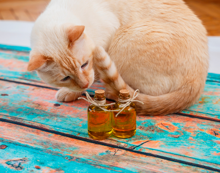 Why Essential Oils Are Bad For Your Cat
