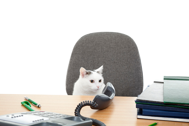 Why Every Office Needs A Cat