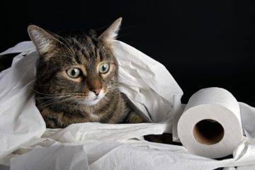 My Cat Has Diarrhea: What's Causing It And How To Help