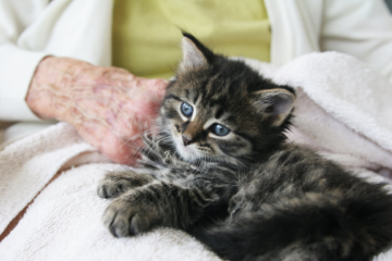 Cat Therapists to the Rescue: How Pet Therapy Helps Seniors