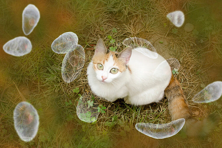 Toxoplasma Gondii: No, Your Cat Isn't Making You Crazy
