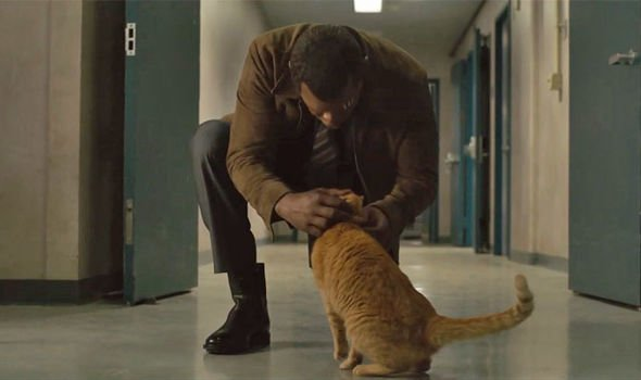 The Real Star of Captain Marvel: Goose the Cat - Front Page