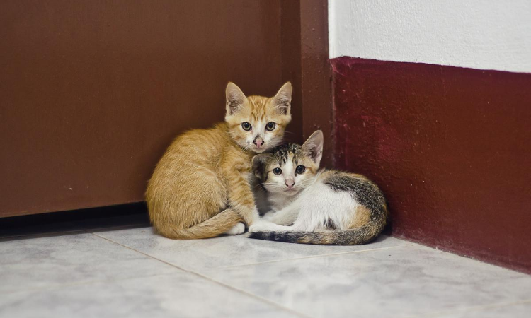 Two kittens laying against a wall