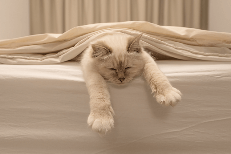 Is Your Cat Sleeping Too Much? Winter Could Be The Cause - CatGazette
